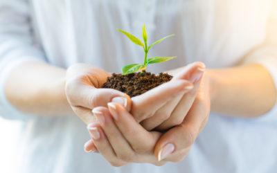 Press Release – Surrogate Escrow Services announces new company SeedTrust